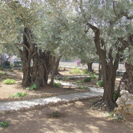 Praying in Our Gethsemane