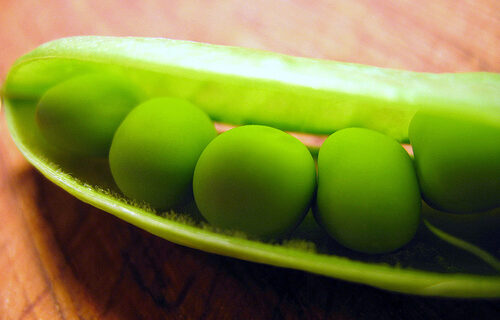 Of Pea Pods and Hurricanes
