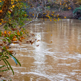 Of Jesus, the Chattahoochee, and Taxi Driver (or, There's Dung in the Baptismal Waters)