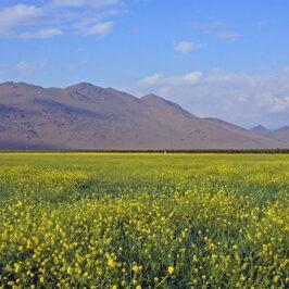 Mustard Seed Kingdom