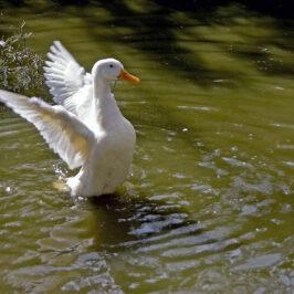 Practice Resurrection: Embrace New Possibilities
