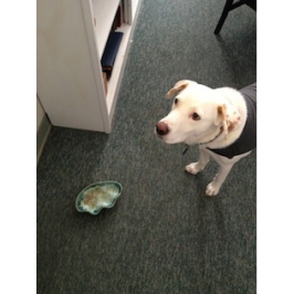"""Insight From Isaac (And His """"Sacred"""" Water Bowl)"""